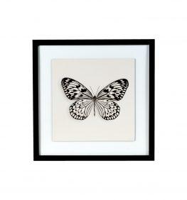 Cuadro Butterfly II